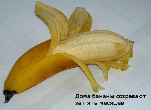 Как получить банан в домашних условиях