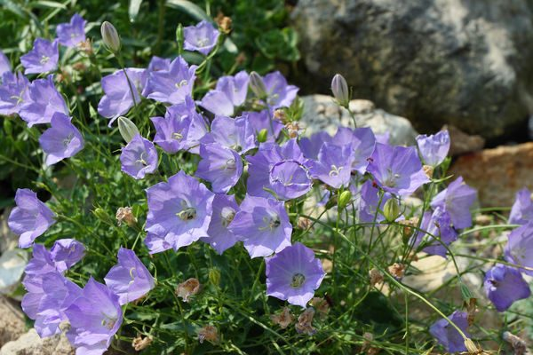 Январь - время цветов и рассады