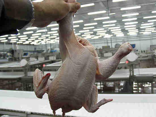 Курятина российских производителей признана опасной для жизни!