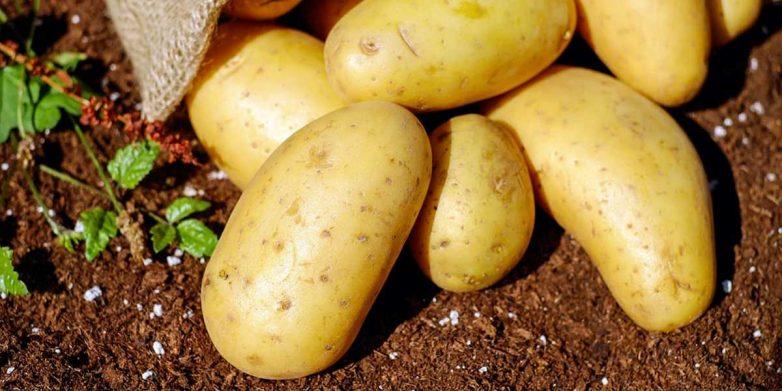Картофель уменьшает риск сердечных приступов и деменции!