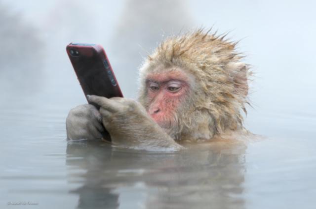 18 неоспоримых доказательств того, что мы являемся родственниками приматов