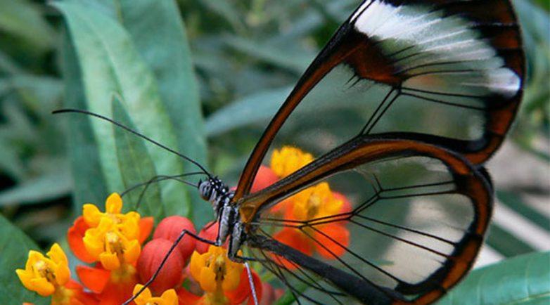 10 почти невидимых созданий природы. Удивительное зрелище!