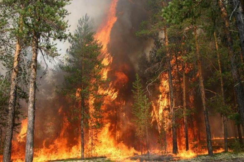 Вы не поверите, но нашим лесам не более 130 лет. Почему?