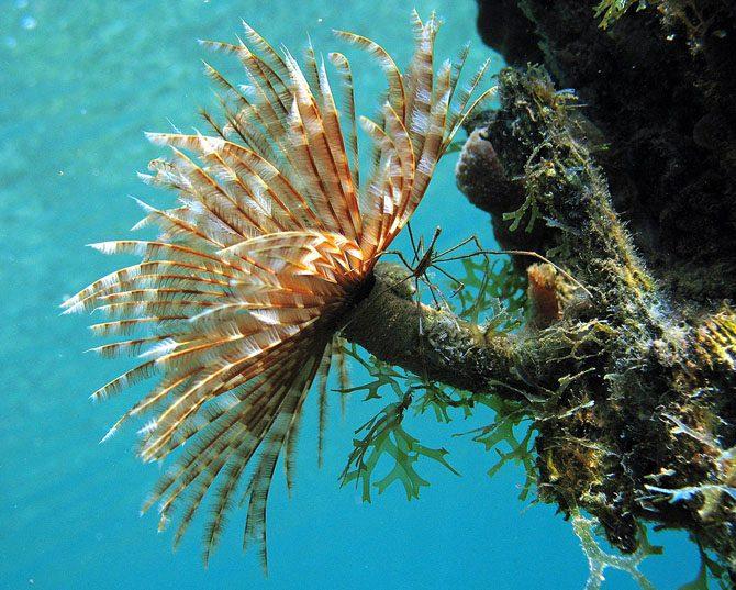 Прекрасные и удивительные коралловые рифы
