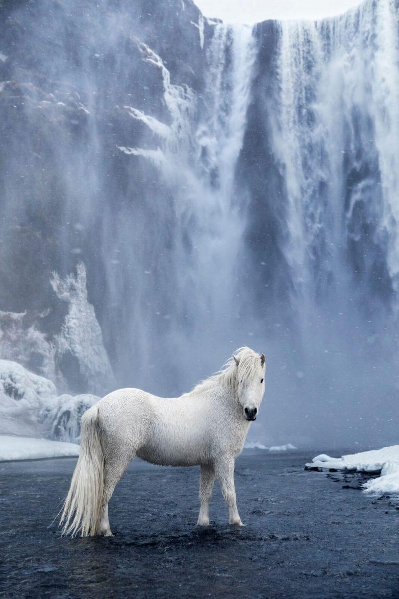 Очаровательные лошадки на ирландских просторах