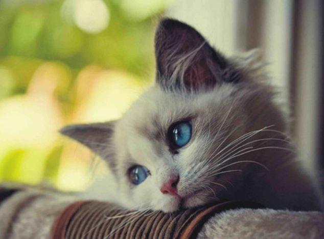 фото котов грустных