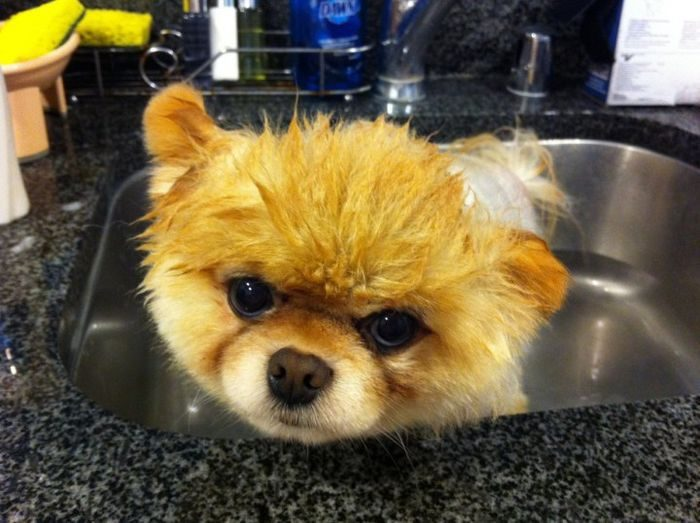 Cutest dog in the WORLD!!!!!  YouTube