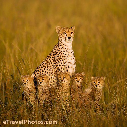 Семейные портреты животных
