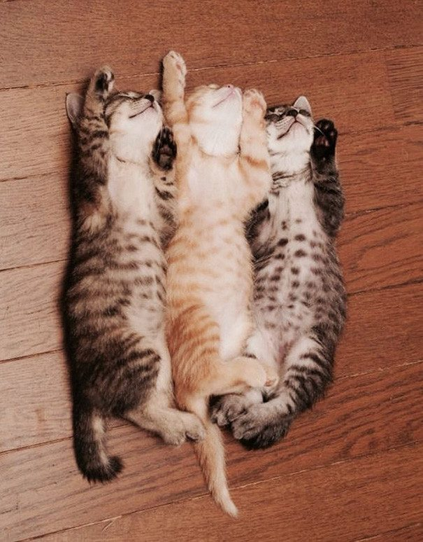 50 очаровательных спящих котят