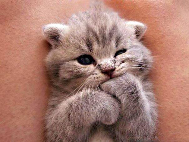 картинки милые с котятами