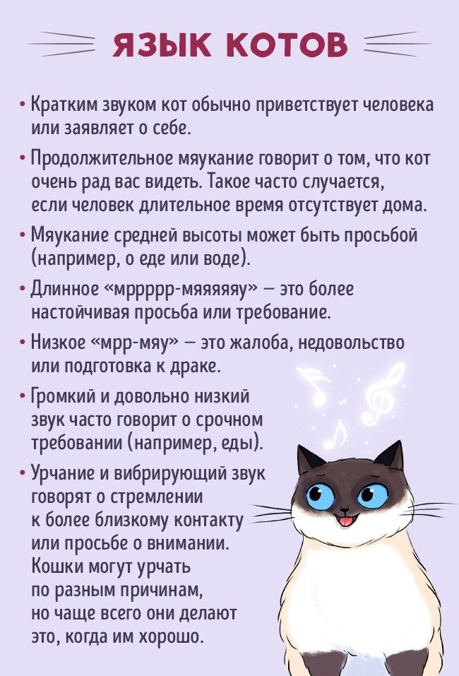 Гдз по коту