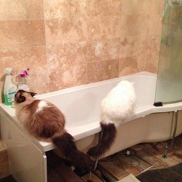 Любите ли вы кошек 2754bc13a6