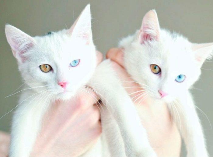 Милые котята, которые превратились в роскошных котов