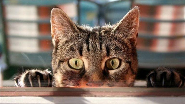 10 научных фактов о кошках