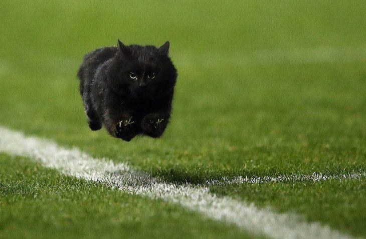 Животные и спорт