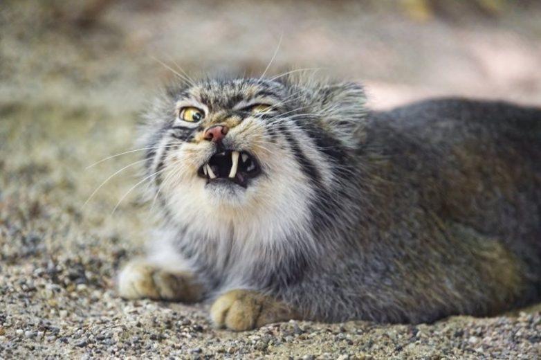 Самые фотогеничные кошки в мире