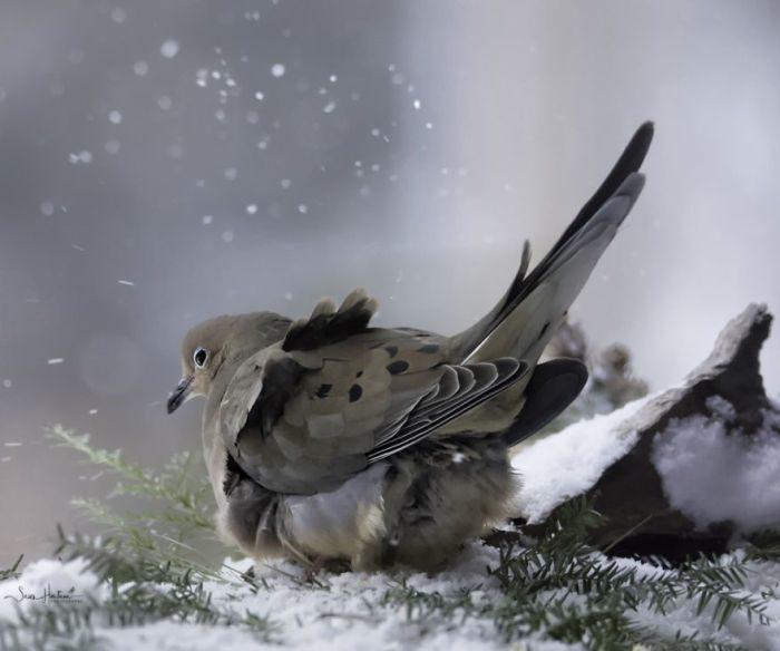 Фотографии лесных зверей и птиц