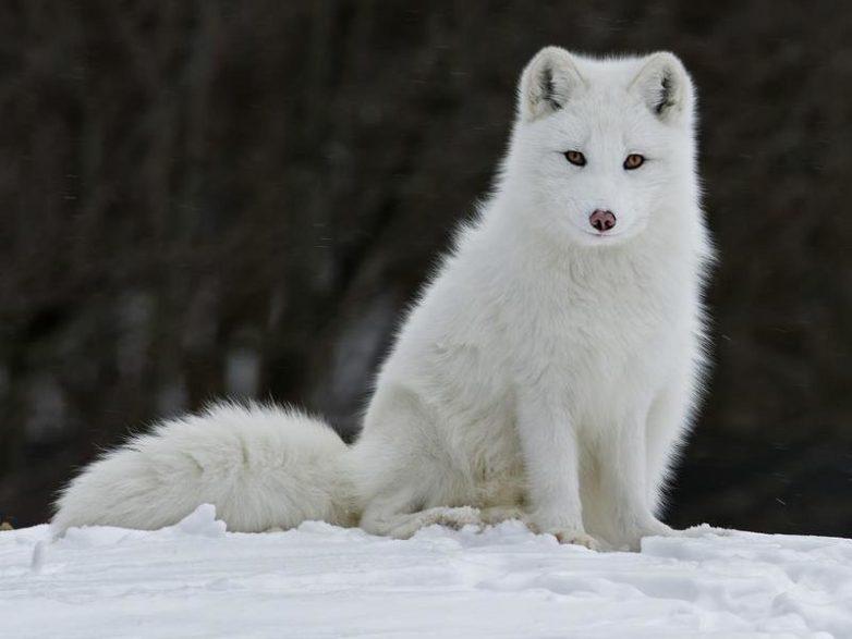 Самые красивые животные со всего мира