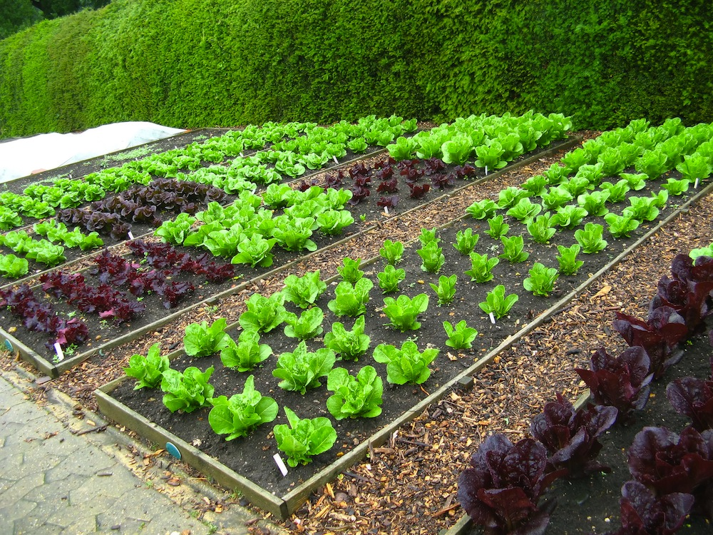 Дизайн сада и огорода своими руками картинки фото