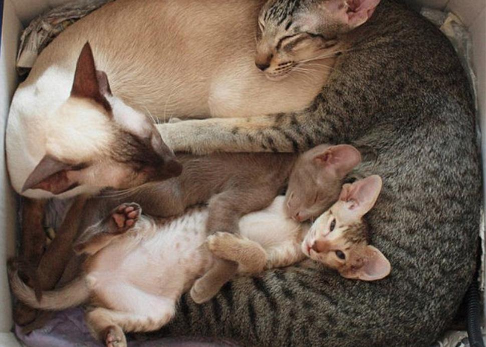Фото семьи котят