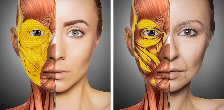Как меняется тело, когда мы стареем