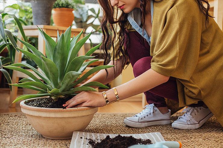 Домашние растения, полезные для здоровья