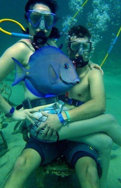 аквалангисты картинки смешные рецепты при