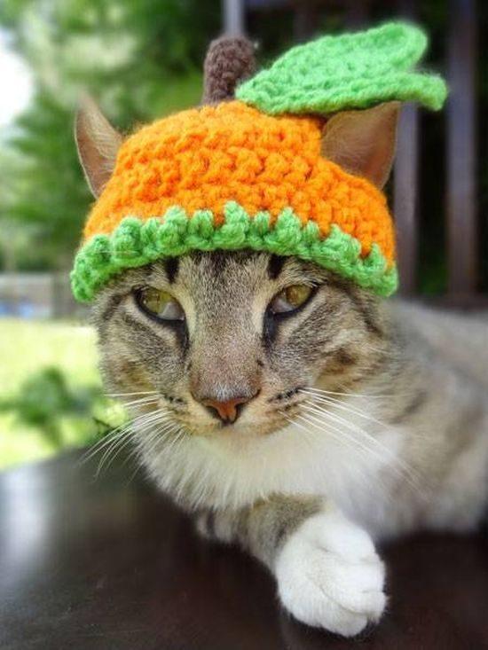 шапки с кошками картинки возведении различных строительных