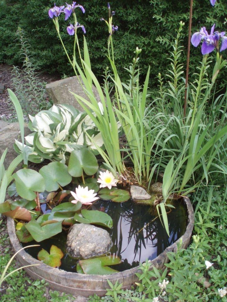 Идеи мини-пруда для красивого сада