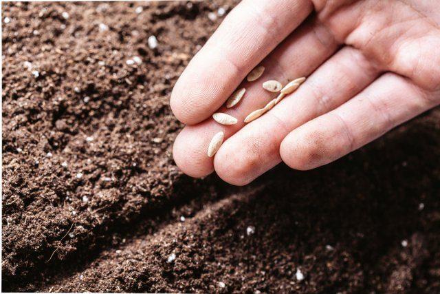 """Как отказаться от """"химии"""" на даче и при этом не потерять урожай"""