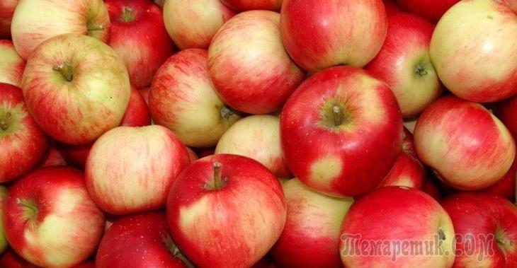 Когда и чем подкормить яблоню