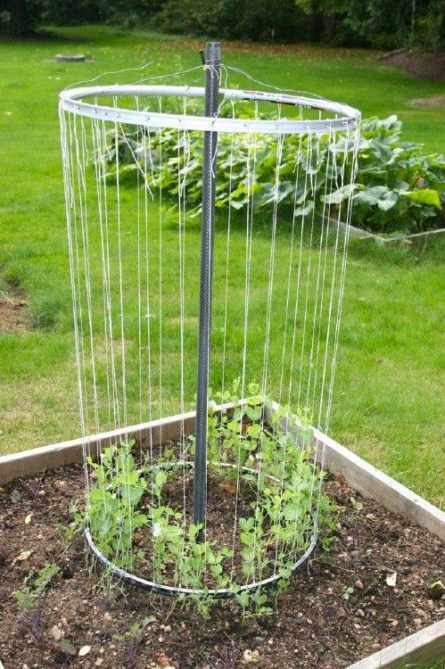 Полезные советы для садоводов