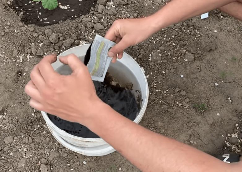 Безопасная подкормка для смородины