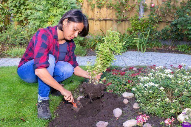 Ошибки при посадке декоративных растений