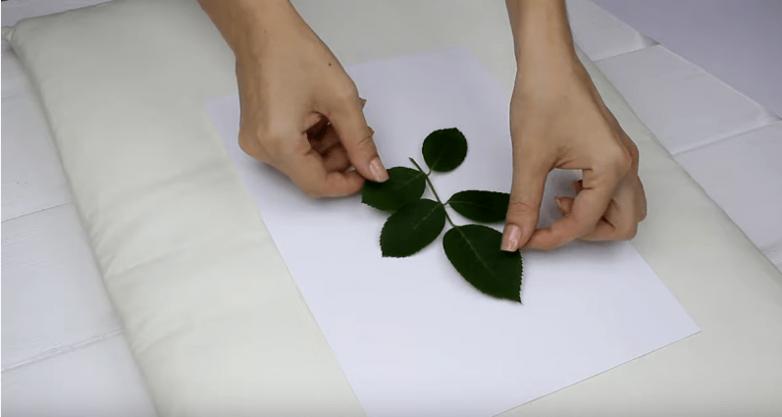 Как мгновенно высушить любые листья и цветы