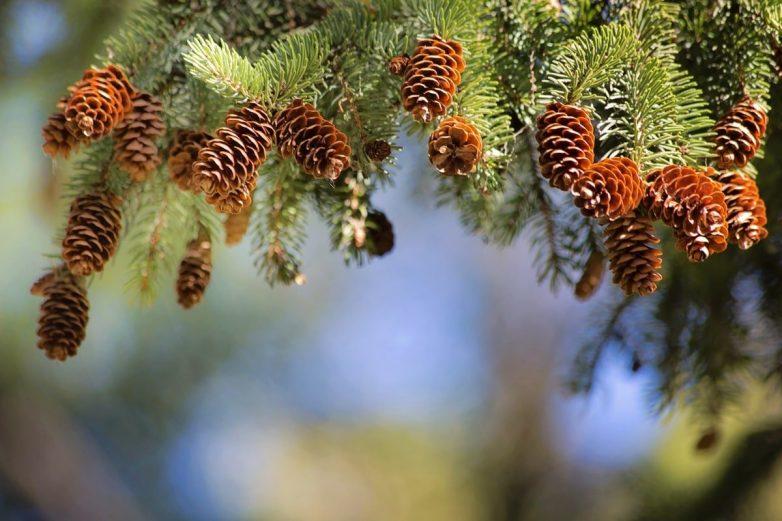 Какие деревья высадить возле дома, чтобы в семье был мир и достаток