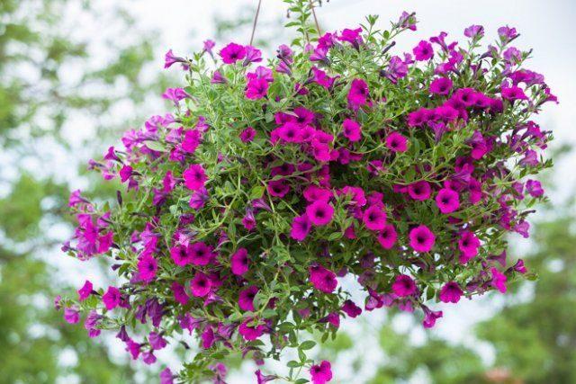 Растения, которые невозможно убить