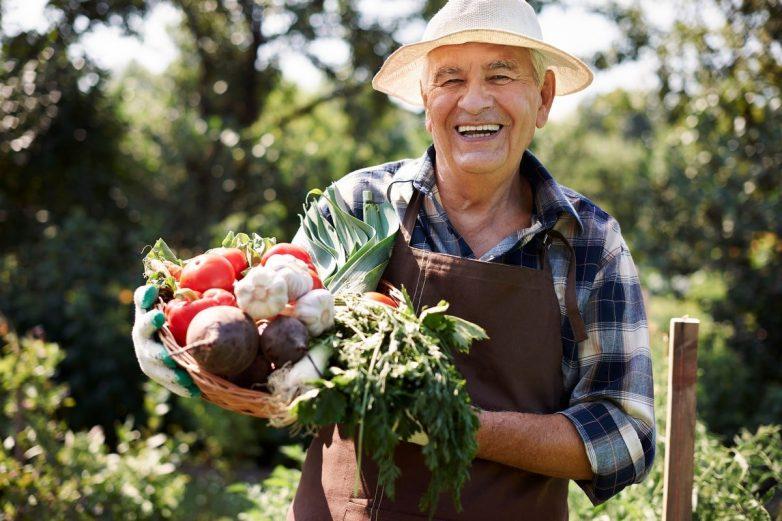 Как получить хороший урожай на собственном участке
