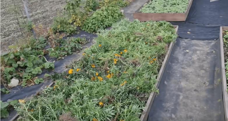 Чудо-средство для огорода, которое вернёт почве плодородие и сделают её мягкой