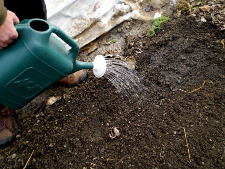 Добавьте 1 ложку полезности для земли и на следующий сезон она как новая