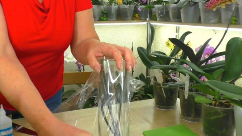 Как вырастить новую орхидею-детку из срезанного цветоноса