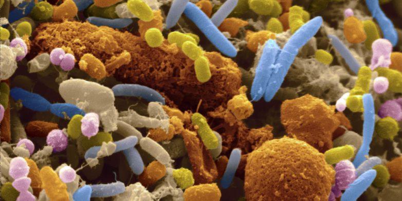 Полезный враг: как паразиты, бактерии и вирусы помогли человеку выжить?