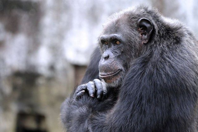 О животном интеллекте