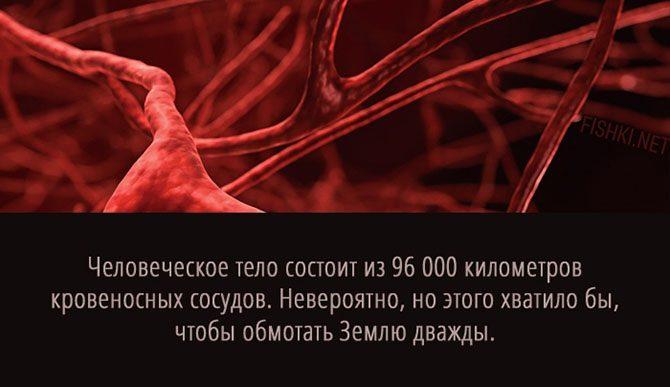 Человек в цифрах: выдающиеся способности нашего организма, о которых мы даже не догадываемся