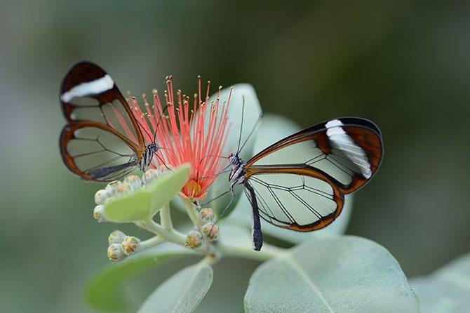 Эффект бабочки: самые удивительные превращения в мире живой природы