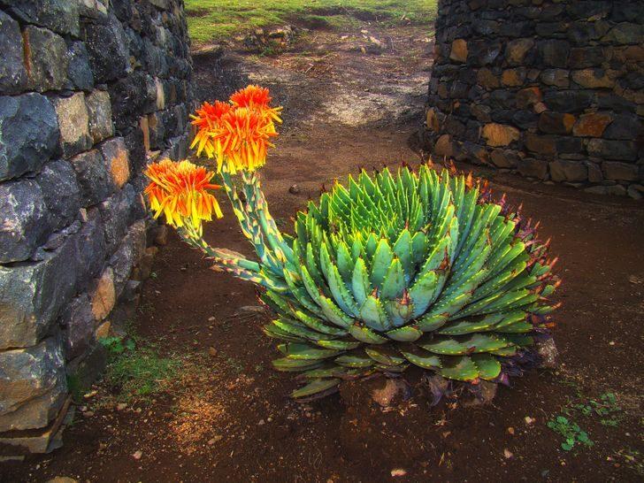 22 реально существующих растения, которые напоминают результат неудачного эксперимента генетиков