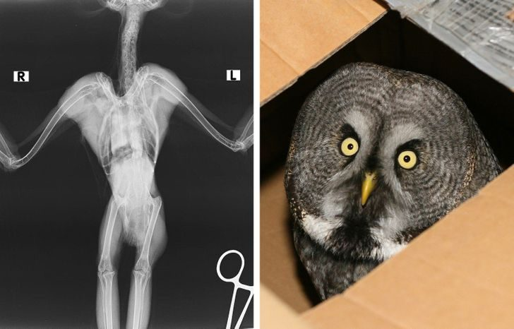 15 рентгеновских снимков, которые позволяют в буквальном смысле заглянуть в суть вещей