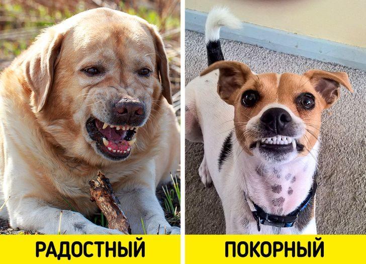10 странных собачьих привычек, у которых есть научное объяснение