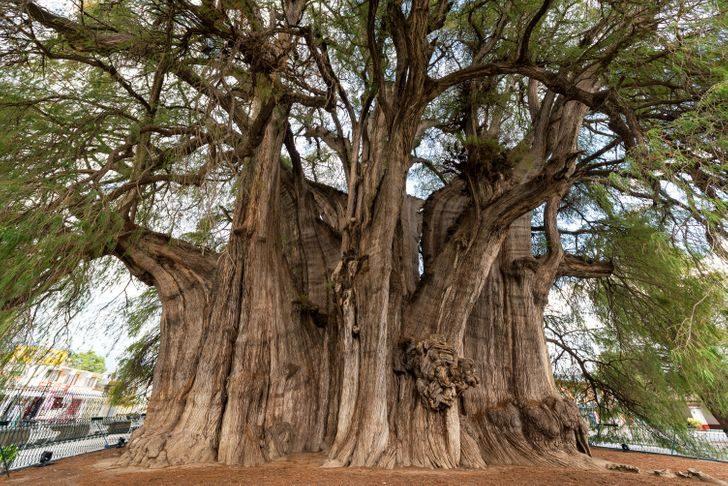 15 удивительных деревьев, которые растут на нашей планете, хотя в это и не верится