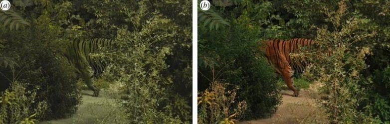 Вопрос на засыпку: почему тигр полосат?